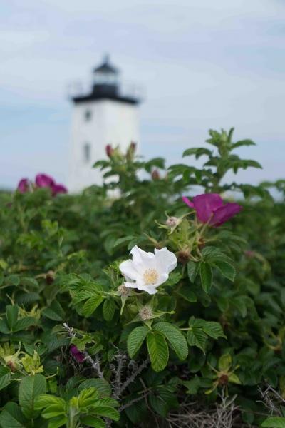 Lighthouse-53